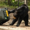 Students research bear-resistant trash can use