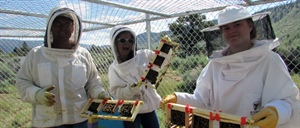 Feral honeybee researchers abuzz about potential breakthroughs