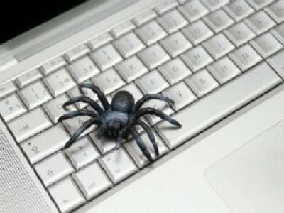 spider on a computer keyboard