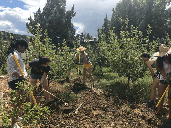 Students working the Campus Food Forest