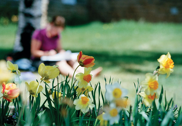 student stuying outside amongst daffodils